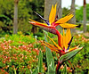 Moody gardens, Galveston, Texas