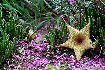 Cactus, Corpus Christi, TX