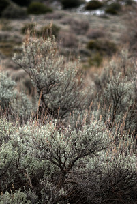 © Joseph Dougherty.  All rights reserved.    Sagebrush dots the landscape of the High Desert and California Coastal Range.