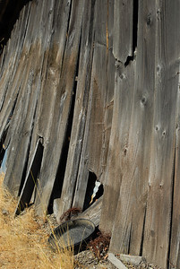 Crumbling wall of an old wooden barn, with gold panning dish at its base.