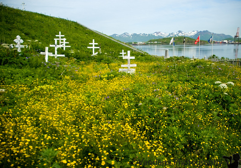 The beachfront cemetry was covered with wildflowers, at Unalaska, alaska