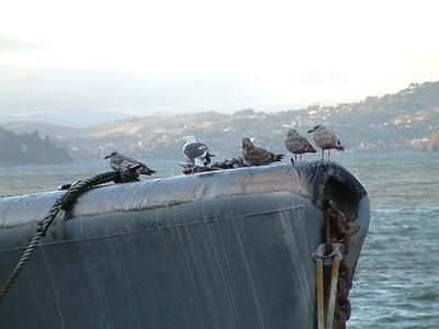 Fisherman's Wharf - I nostri compagni di viaggio sul sottomarino museo 2004-03-02 at 02-27-47