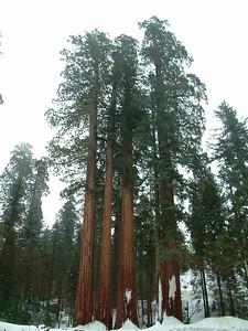 Sequoia park - Le sequoie: non Ë facile percepire la dimensione... 2004-03-05 at 22-30-25