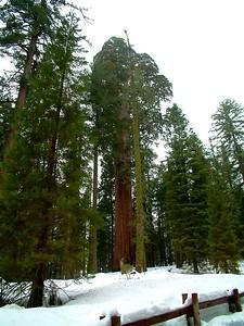 Sequoia park - Le sequoie: non Ë facile percepire la dimensione... 2004-03-05 at 22-35-15