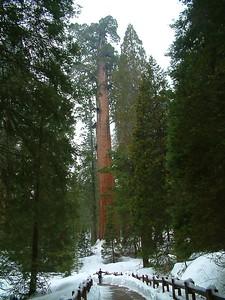 Sequoia park - Notare la persona in basso e immaginare quanto è grande la sequoia 2004-03-05 at 22-50-54