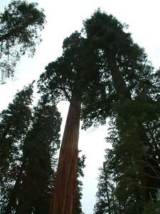 Sequoia park - Le sequoie: non Ë facile percepire la dimensione... 2004-03-05 at 22-26-48