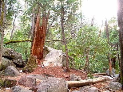 Yosemite - La foresta... non ho ottenuto l'effetto voluto ma va bene cmq 2004-03-05 at 01-38-08
