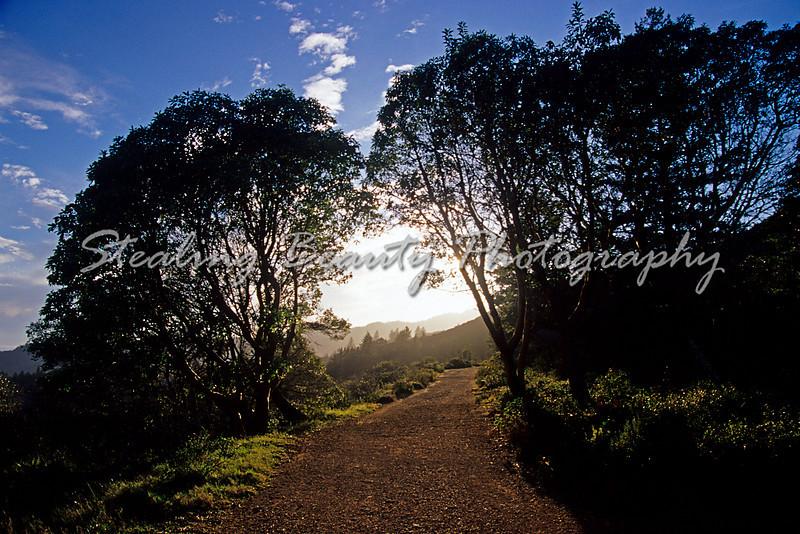 Mt Tamalpais trail