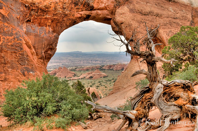Deadwood by the arch. Arches National Park, Utah.