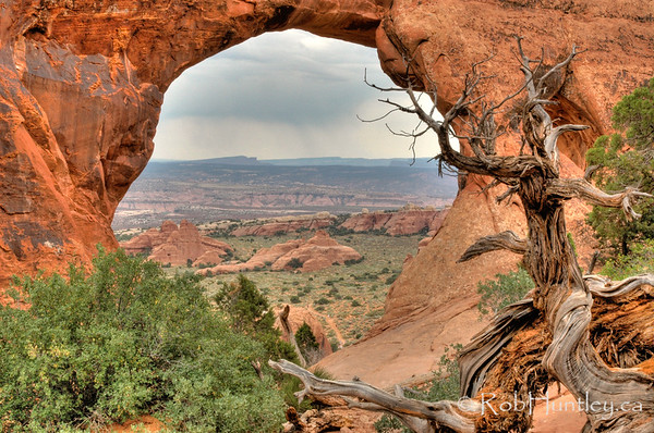 Deadwood at the Arch. Arches National Park, Utah.