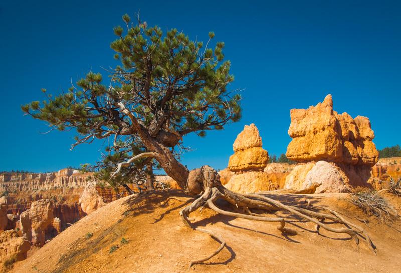 Southwest Desert Vacation