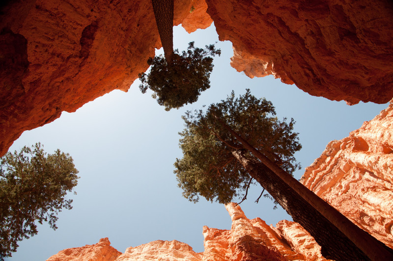 Looking up from Wall Street in Bryce Canyon National Park