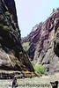 in the Narrows, Zion, UT