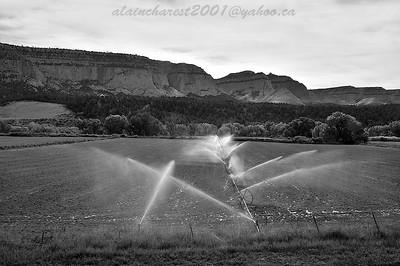 Water in the field