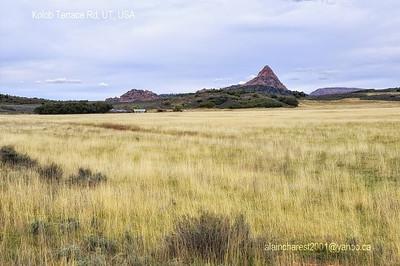 Utah prairie