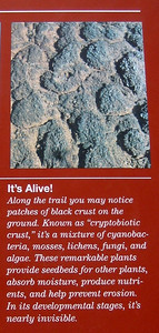 There's a photo of this cryptobiotic crust a little later on.