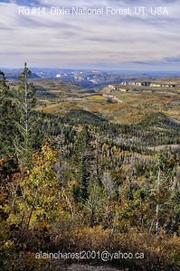 Dixie forest autumn