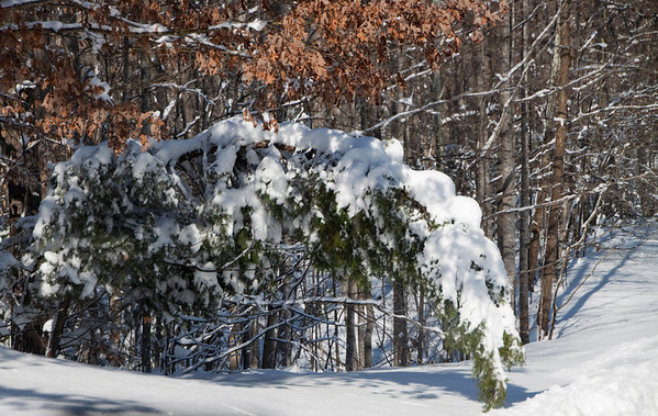 VA, Goochland and Surrounding Areas - Winter Images