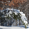 Snow Storm_122009_121753