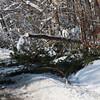Snow Storm_122009_112517