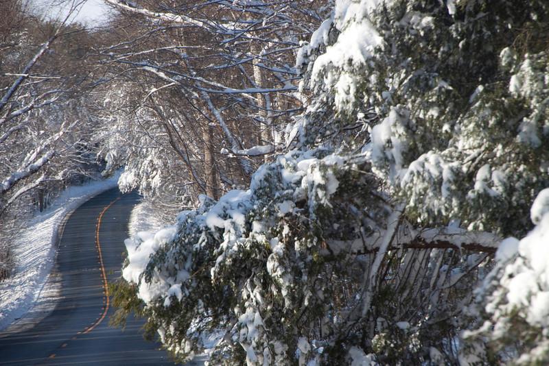 Snow Storm_122009_111826 (1)