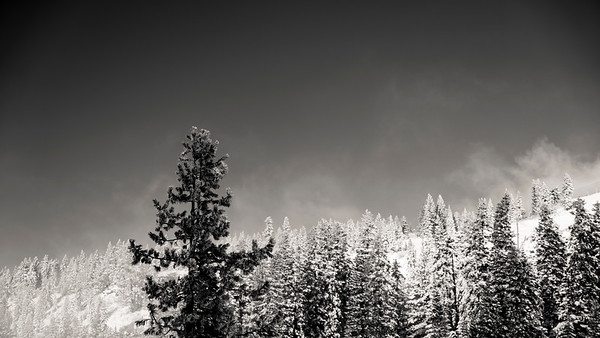 Viking Ski Trip