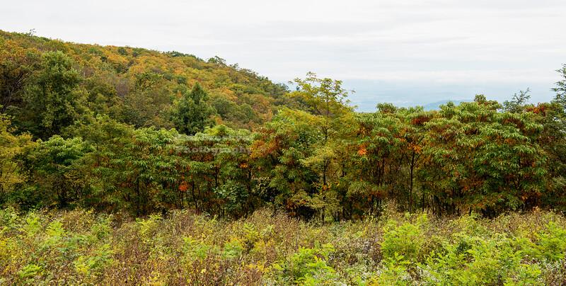 Skyline Drive Shenandoah National Park Milepost 12.0 - Jenkins Gap Overlook