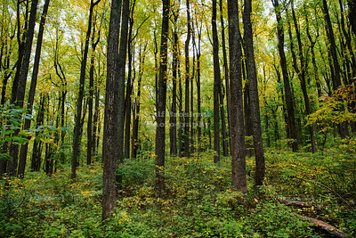 Skyline Drive Shenandoah National Park Milepost 7.9 - Low Gap