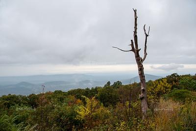 Skyline Drive Shenandoah National Park Milepost 15.0 - Browntown Valley Overlook