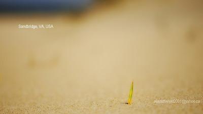 Solitaire sur la dune