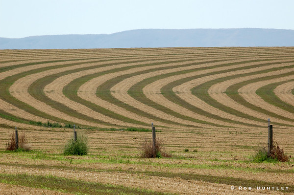 Contours in a hay field during harvesting. This image was taken on Hwy 22 west of Mabton, Washington.  © Rob Huntley