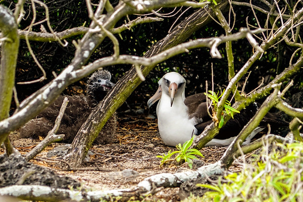 Kaena Point Nature Reserve on Oahu, Hawaii