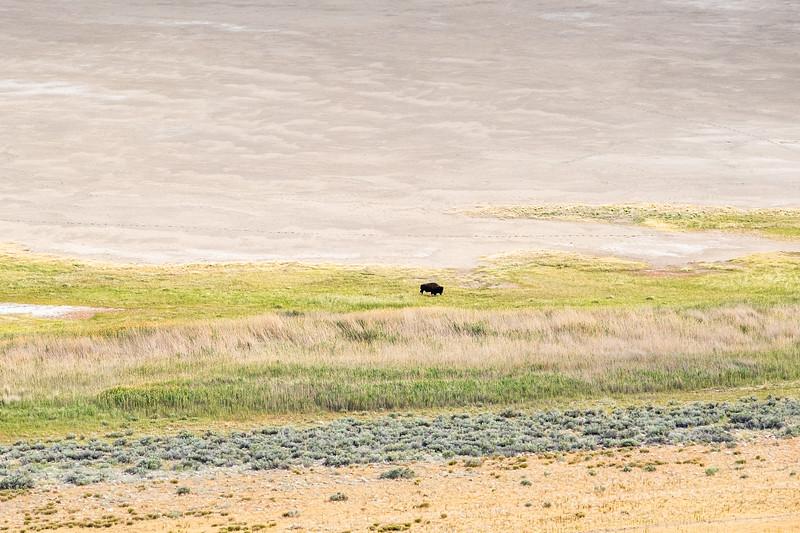 Antelope Island in Sal Lake City, Utah