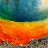 Morning Glory Pool Yellowstone National Park in North America