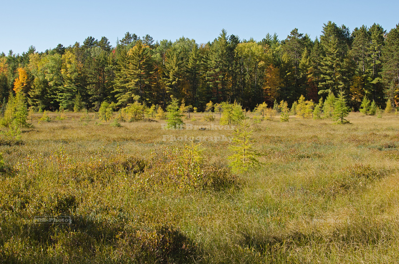 Fall in Chequamegon-Nicolet National Forest, Wisconsin, USA