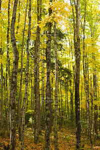 Fall in Chequamegon-Nicolet National Forest