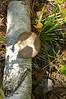 Mushroom on a Birch Tree