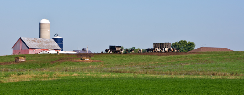 Pastoral landscape; feeding of the cows near Kewaunee