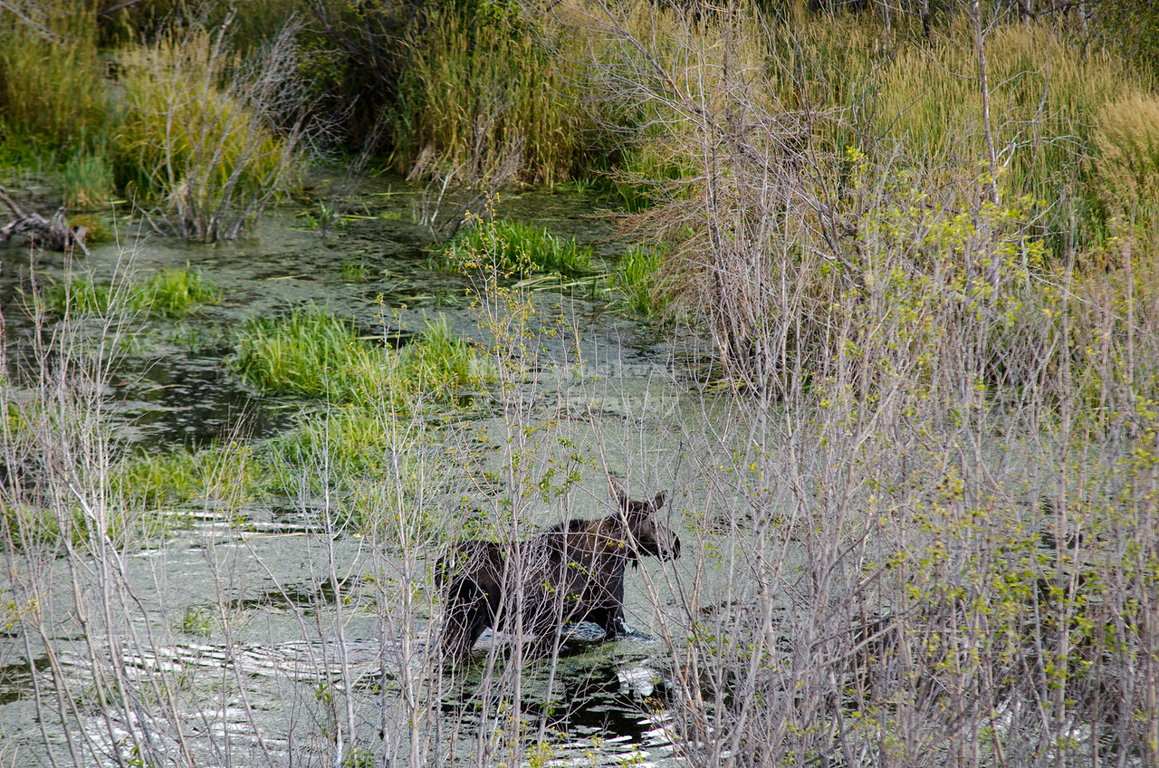 Moose Wilson Road, Grand Teton National Park