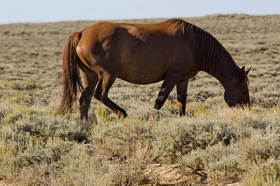Wild Horse on the Wild Horse Loop Road in Sweetwater County, Wyoming