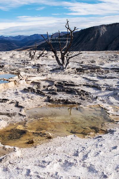 Main Terrace at Mammoth Hot Springs