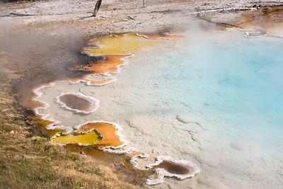 Bacteria in Yellowstone