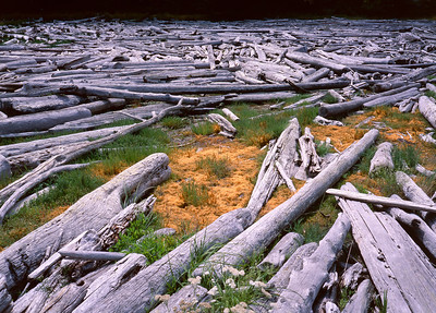 Driftwood collects in a lagoon at Spencer Spit State Park, Lopez Island. San Juan Islands, Washington State.