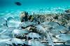 Underwater at Castaway Quay, Bahamas