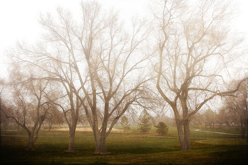 """Spring Fog"" - Salt Lake City, Utah USA<br /> <br /> This is the golf course near my house. I drive by it all the time with this gorgeous fog and I always say that someday I'll capture it. Well, someday is a rotten way to live so I decided to do it today. Luckily the fog held for a while and it turned out wonderfully."