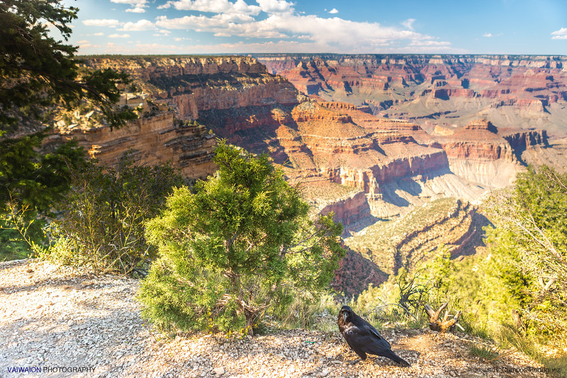 Raven and the Grand Canyon