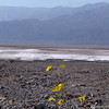 <strong><Center>Salt Basin<br> Contrast is the source of all. Death Valley in California is a stark and beautiful place.  We enjoyed the contrast between the colors of the flower and the lifeless background of a salt basin.