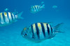 Underwater Snorkel, Cozumel Mexico