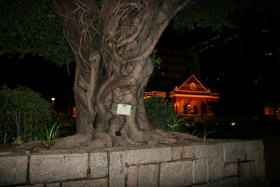 A large banyan tree in Kowloon.