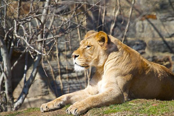 Philadelphia Zoo, March 2014